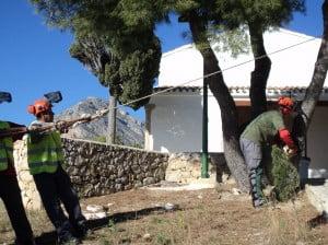 Trabajo de poda de pinos en la Ermita de Santa Lucía