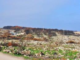 Zonas verdes entre el terreno calcinado