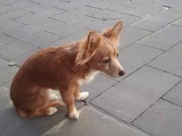 Perro desaparecido en Jávea