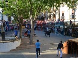 Bous al Carrer en la Placeta del Convent a Xàbia