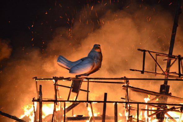 Paloma junto al fuego