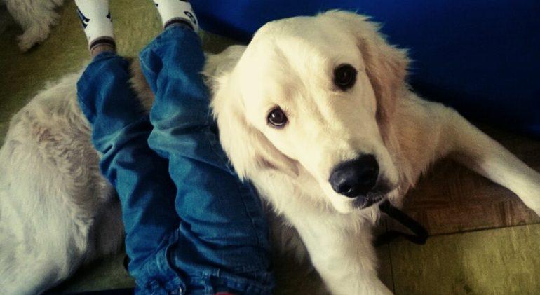 Un perro que trabaja en la recuperación de enfermos