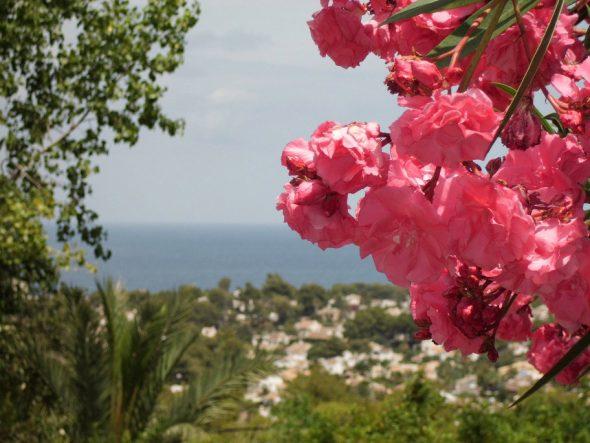 Vistas desde propiedad Belen Quiroga