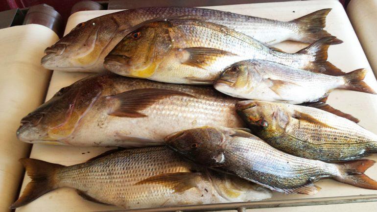 Pescado requisado por la policía local de Xàbia