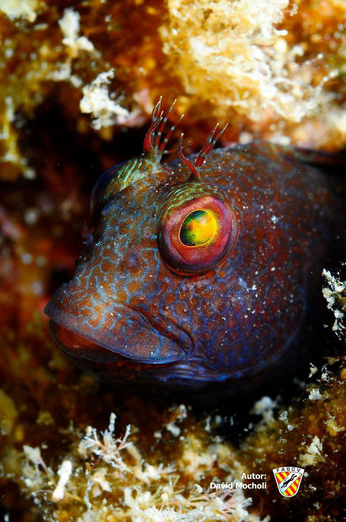 Foto Detalle pez de David Mocholí