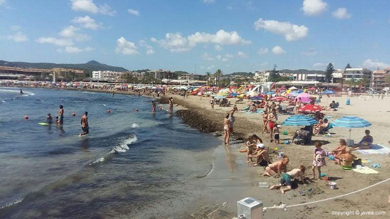 Algas en la Playa del Arenal