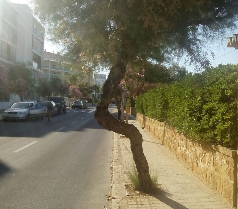 Árbol en la avenida Ultramar