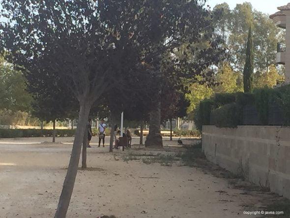 Perro suelto en parque infantil