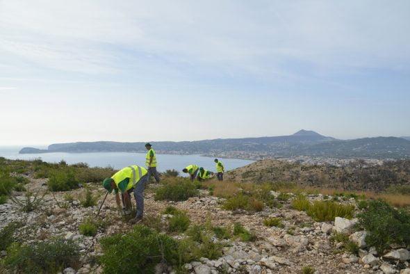 Trabajos de limpieza forestal en La Plana