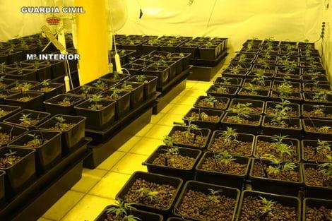 Plantación ilegal de marihuana en Jávea