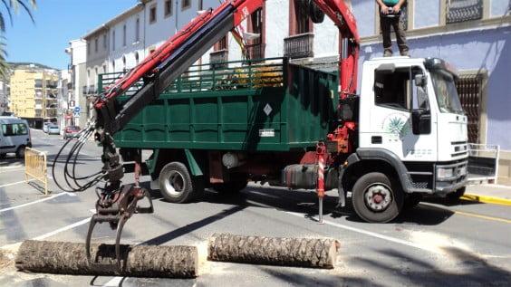 Restos de la palmera afectada de picudo rojo en la Avenida de Alicante de Jávea