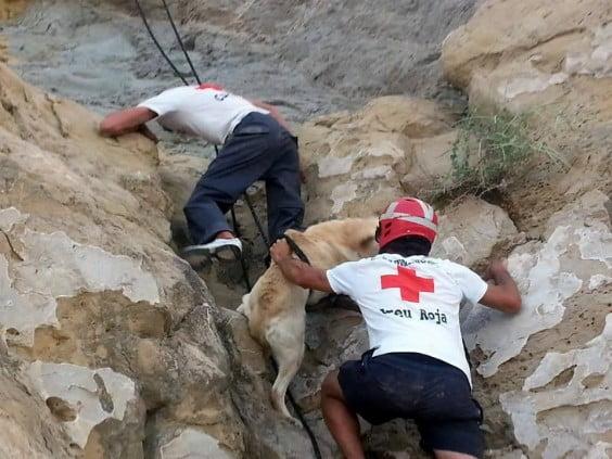 Cruz Roja en Jávea rescata a un perro de la playa del Portixol
