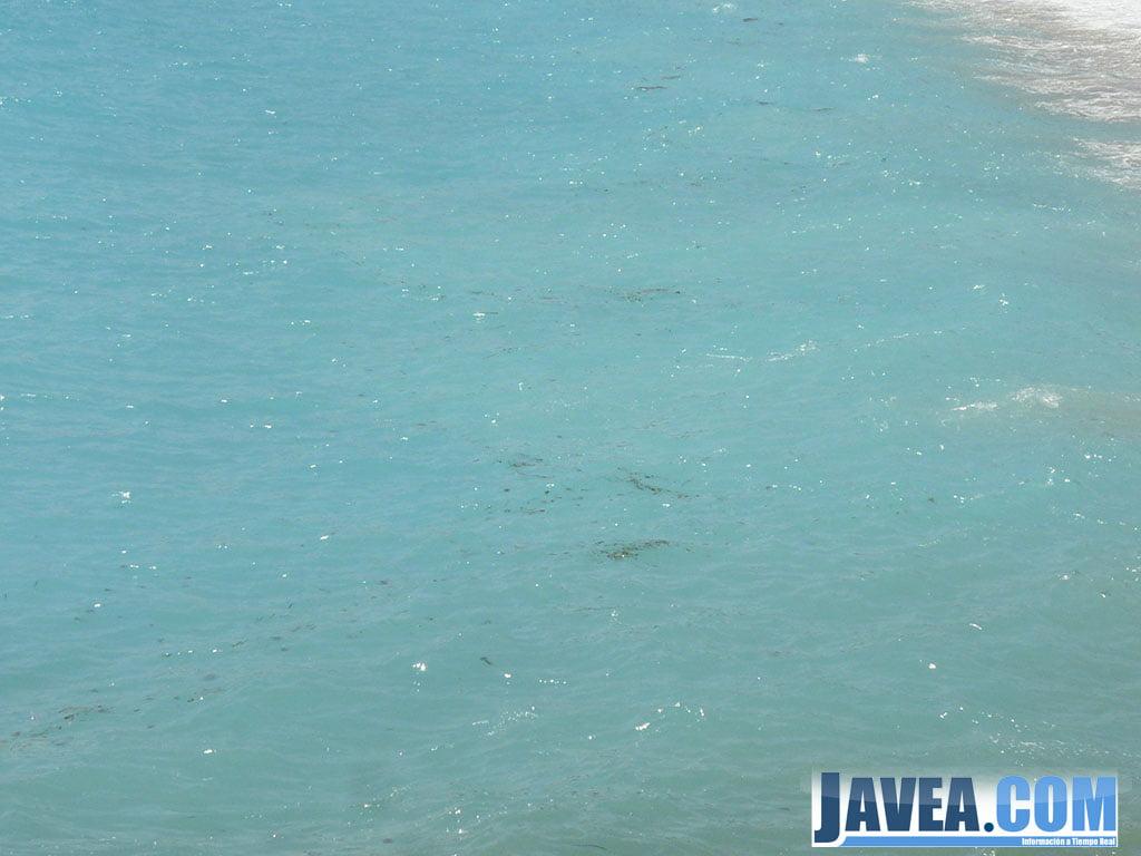 Los bancos de medusas se agrupaban en la orilla de las playas de Jávea impidiendo el baño.