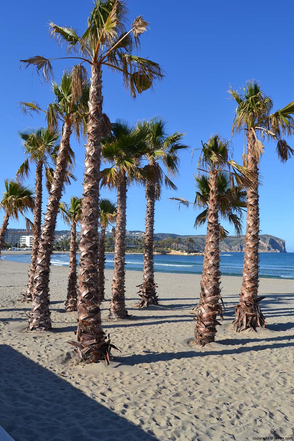 Palmeras en la Playa del Arenal de Jávea