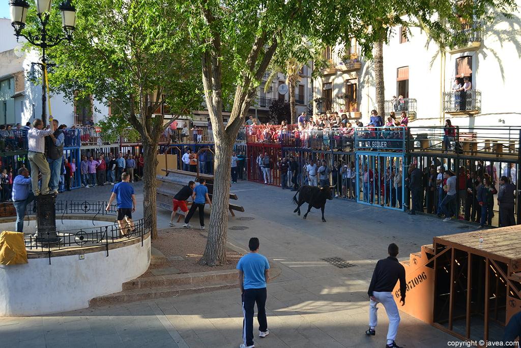 Bous al carrer en Jávea en la Placeta del Convent