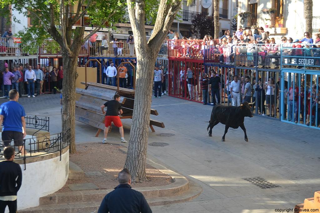 Els bous al carrer en Jávea inauguran las fiestas de Jesús Nazareno en Jávea