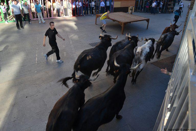 Entrada de toros y vaquillas en las fiestas del Nazareno de Jávea
