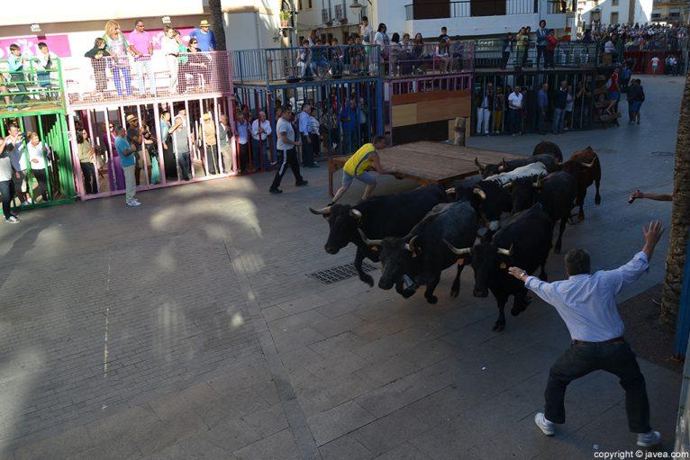 La sesión de tarde de bous al carrer en Jávea ha empezado con una entrada de toros y vaquillas
