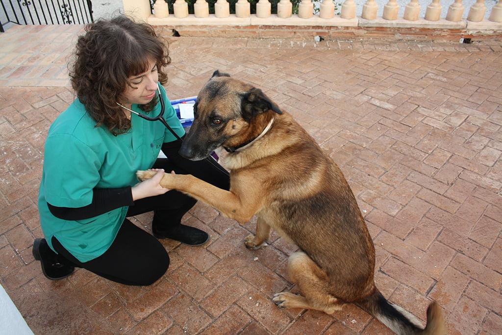 Sanavet acude a domicilio para atender a tus mascotas