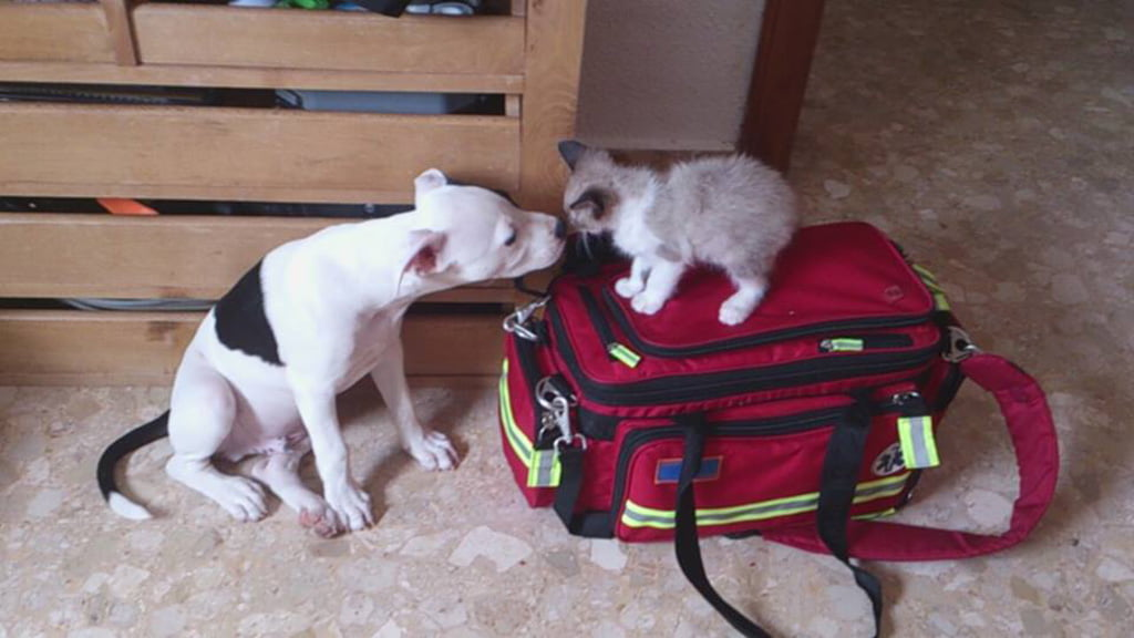 Yako y Panchito