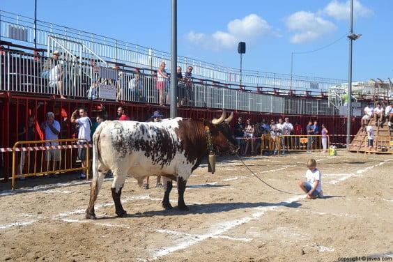 Manso durante la gran cagada celebrada en el recinto taurino
