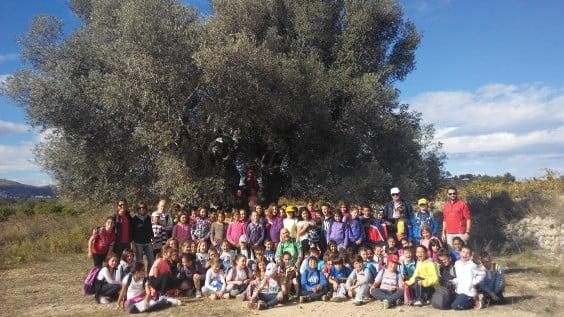 Visita a les Barranqueres i olivera milenaria Graüll 2