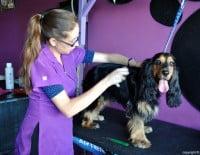 Descuento peluquería canina Palau de les Mascotes