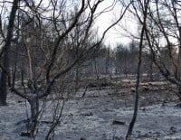 La Plana y el Cabo de San Antonio fueron devastados por el fuego