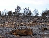 Resultado-del-incendio-en-Las-Planas-y-Cabo-de-San-Antonio