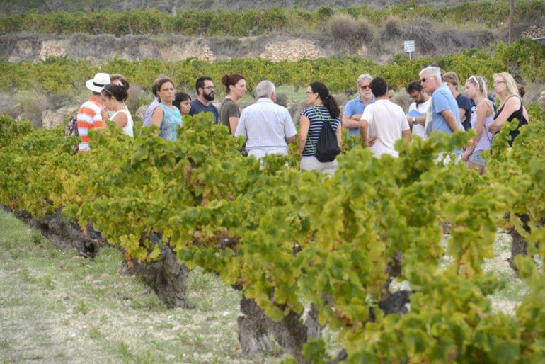 Visita a los viñedos de Poble Nou de Benitaxell