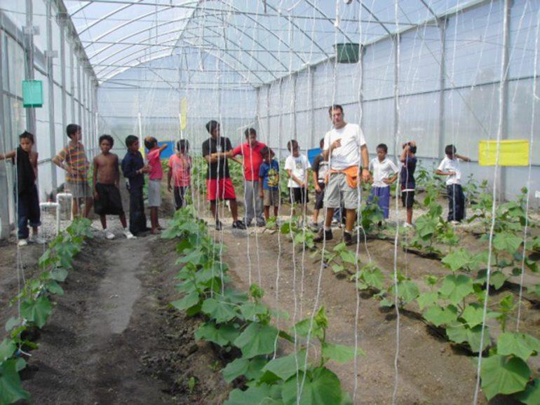 Invernadero con hortalizas cultivadas