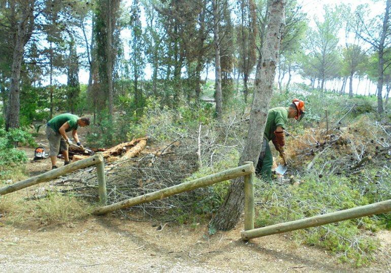 Operarios retirando los pinos de la zona de la Plana