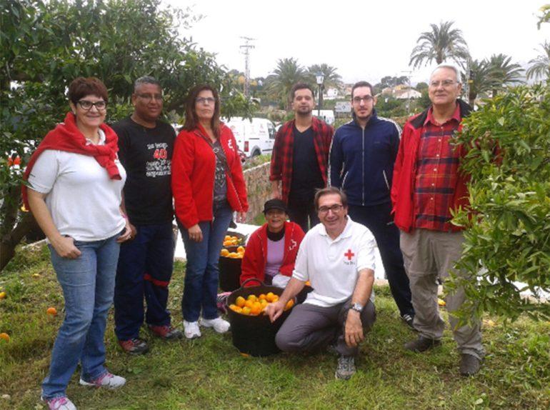 Voluntarios de Cruz Roja cogiendo naranjas