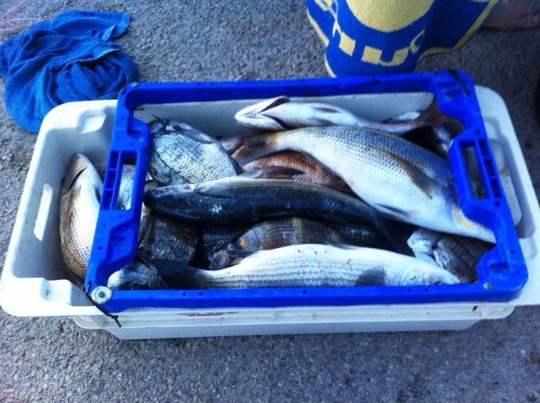 Pescado requisado a furtivos
