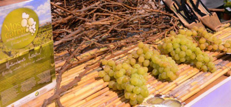 Uvas moscatel de Poble Nou de Benitatxell