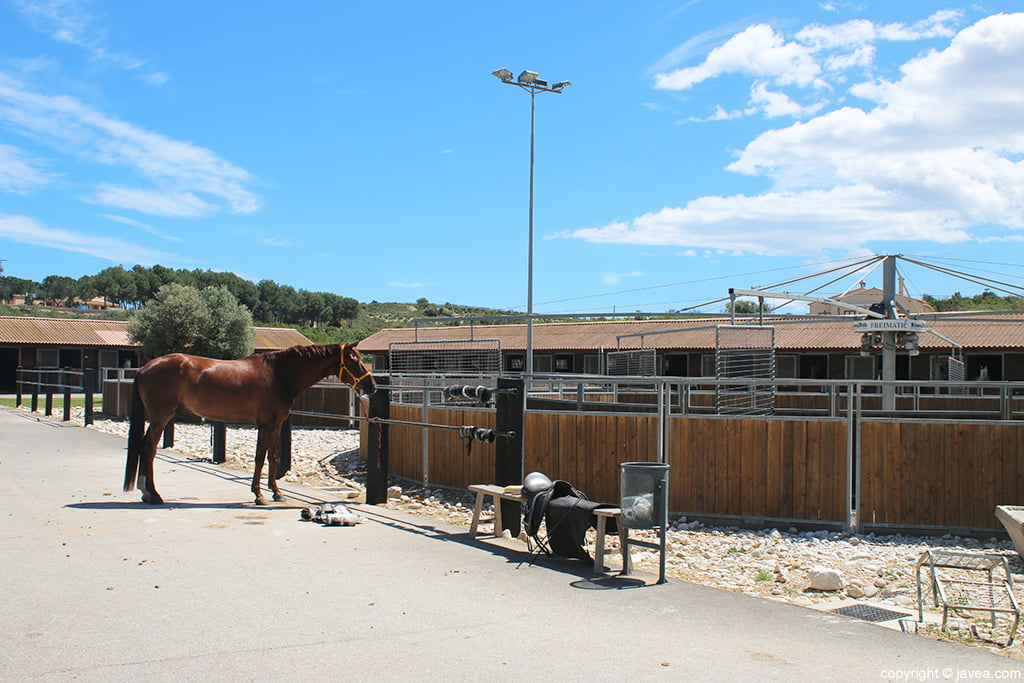 Caballo Restaurante Vall de Cavall