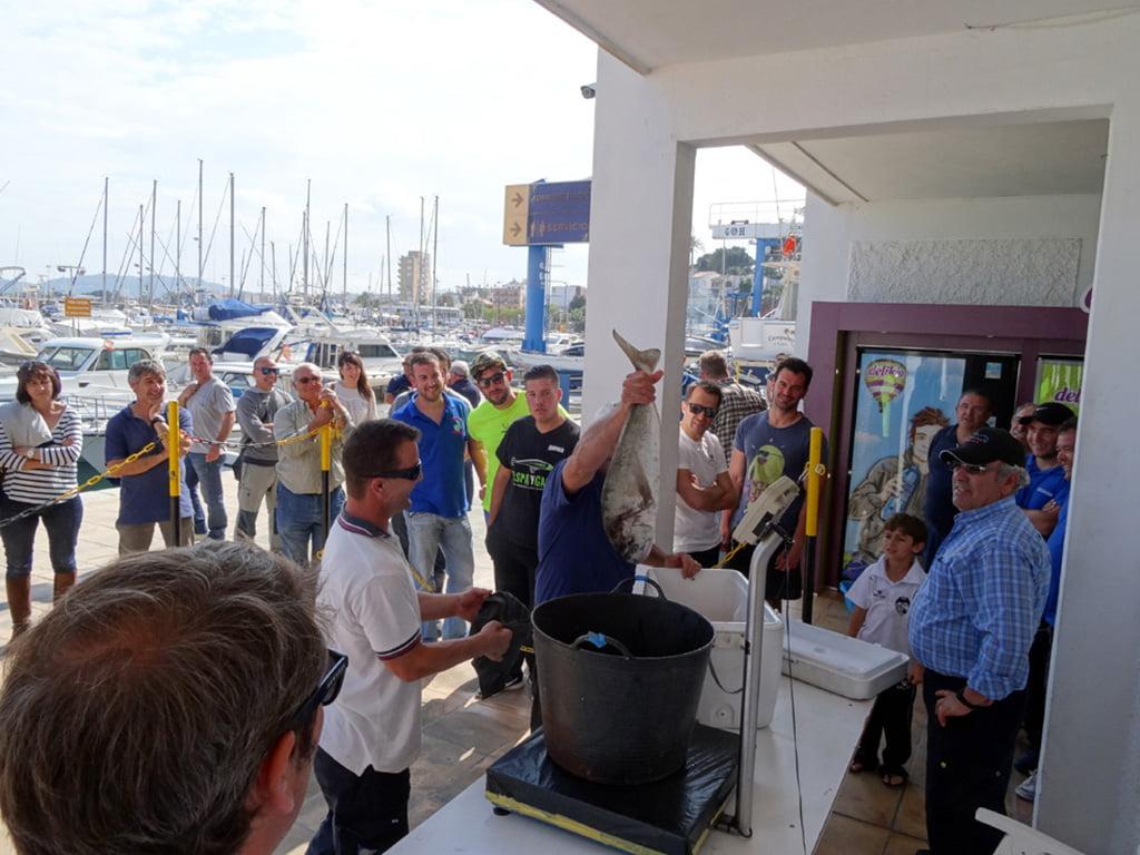 Pesatge captures del campionat de pesca al Xambet