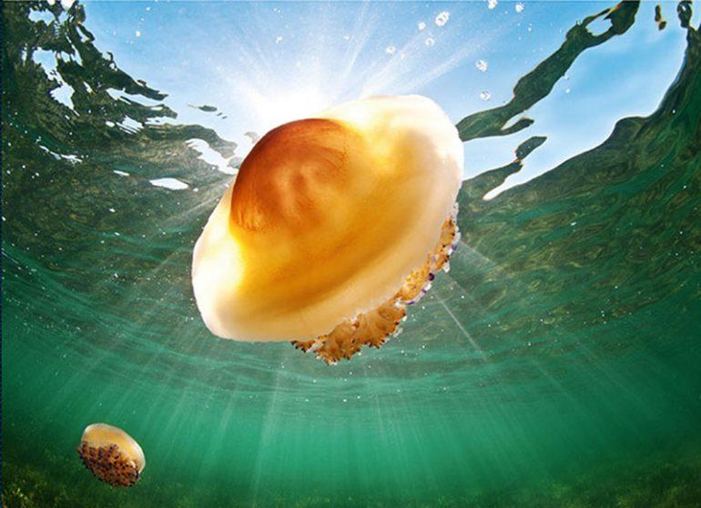 Un medusa en el mar
