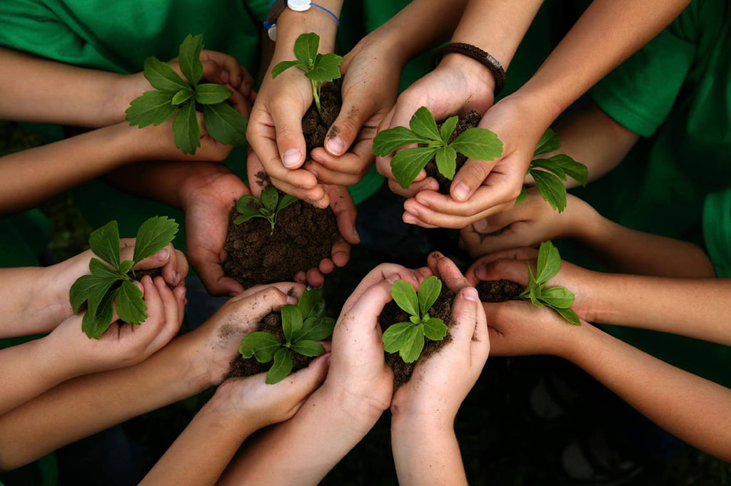 a world without plants essay A world without plants essay sample plants probably the most ignored organism on this planet people walk past plant and cut them down but nobody ever thinks about what they do for us, what the world would be if there was never any plants or photosynthetic organisms.