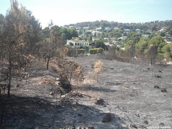 Parcela afectada por el fuego