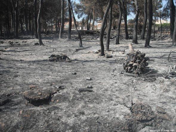 Zona forestal quemada