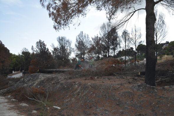 Los operarios talan los árboles calcinados