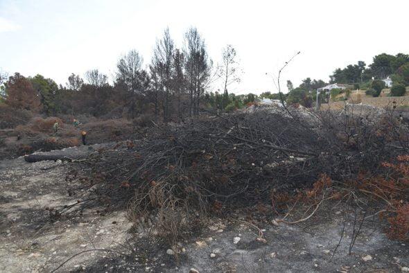 Limpian las zonas quemadas y talan los árboles afectados
