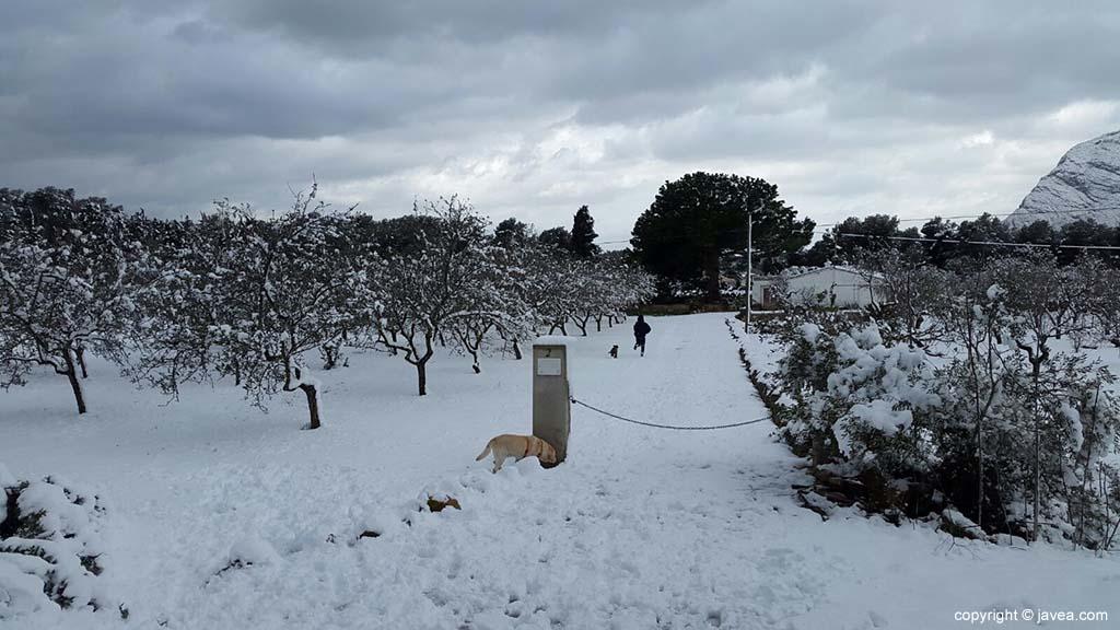 74 Nieve en Xàbia