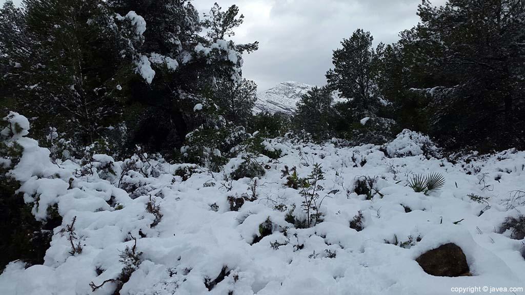 79 Nieve en Xàbia