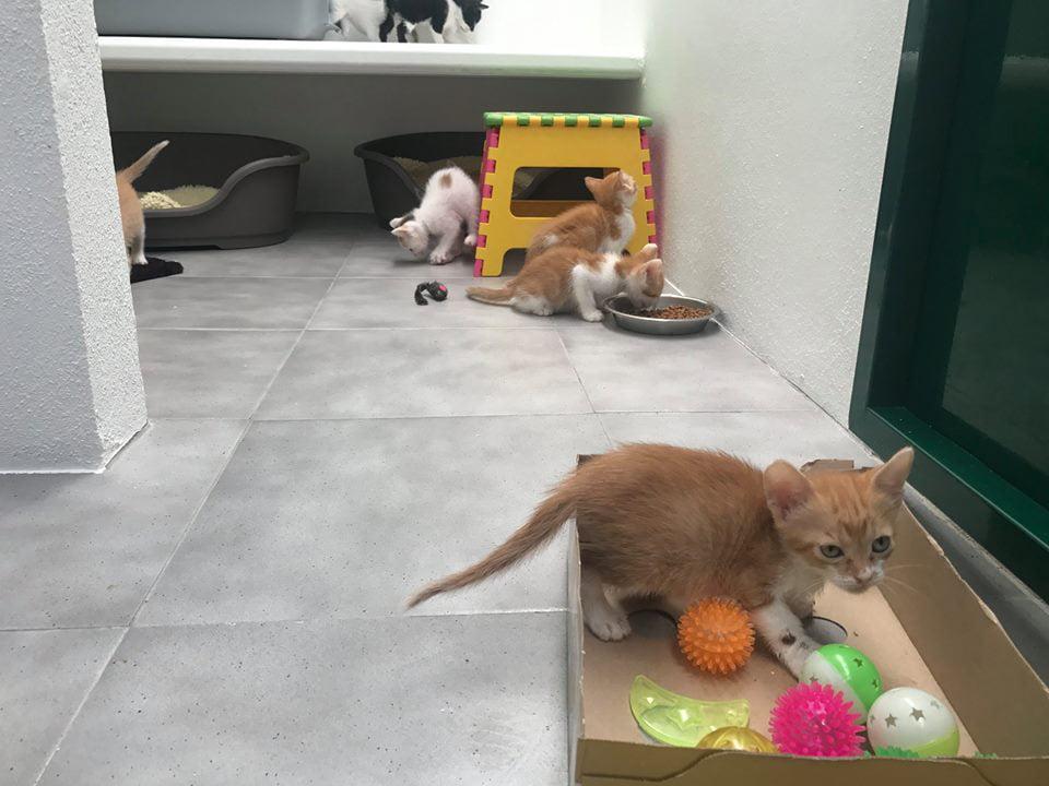 Gatitos abandonados dentro de una caja precintada