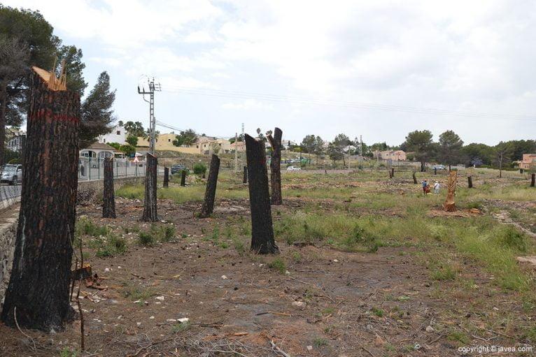 20 arbres de Pinosol seran escultures