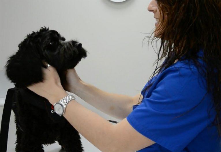 Prevención  y diagnóstico Centro Veterinario Animalets