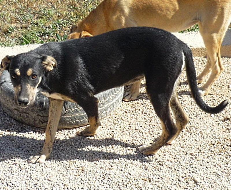 Isa, una perra que busca un nuevo hogar