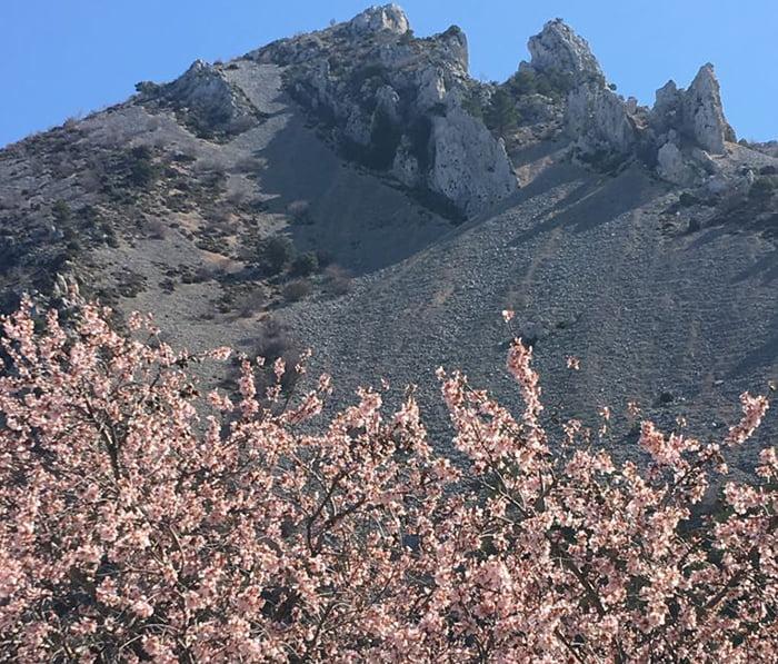 Almendros floridos durante la ruta